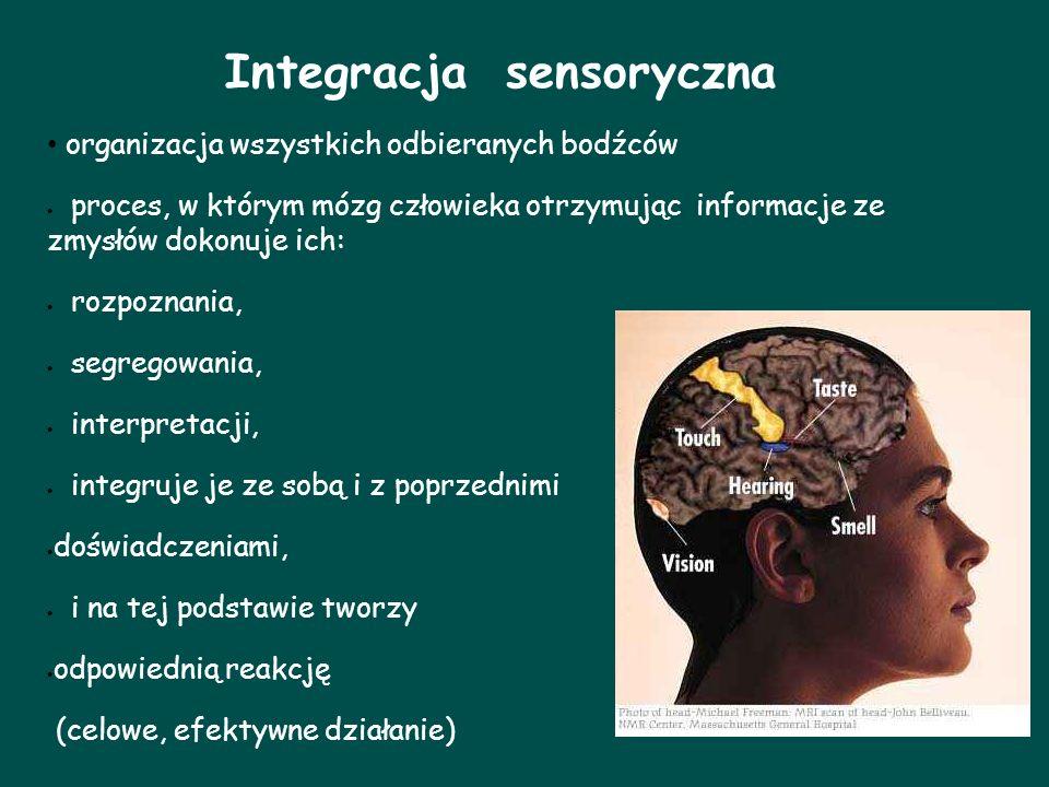 Integracja sensoryczna organizacja wszystkich odbieranych bodźców proces, w którym mózg człowieka otrzymując informacje ze zmysłów dokonuje ich: rozpo