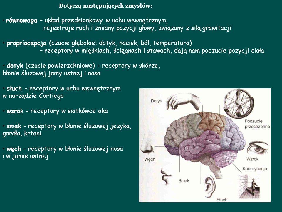 Dotyczą następujących zmysłów: równowaga – układ przedsionkowy w uchu wewnętrznym, rejestruje ruch i zmiany pozycji głowy, związany z siłą grawitacji