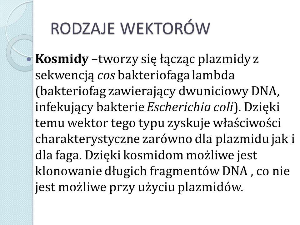 RODZAJE WEKTORÓW Kosmidy –tworzy się łącząc plazmidy z sekwencją cos bakteriofaga lambda (bakteriofag zawierający dwuniciowy DNA, infekujący bakterie