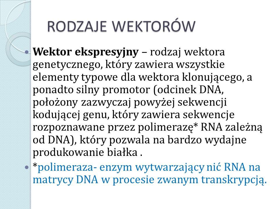 RODZAJE WEKTORÓW Wektor ekspresyjny – rodzaj wektora genetycznego, który zawiera wszystkie elementy typowe dla wektora klonującego, a ponadto silny pr