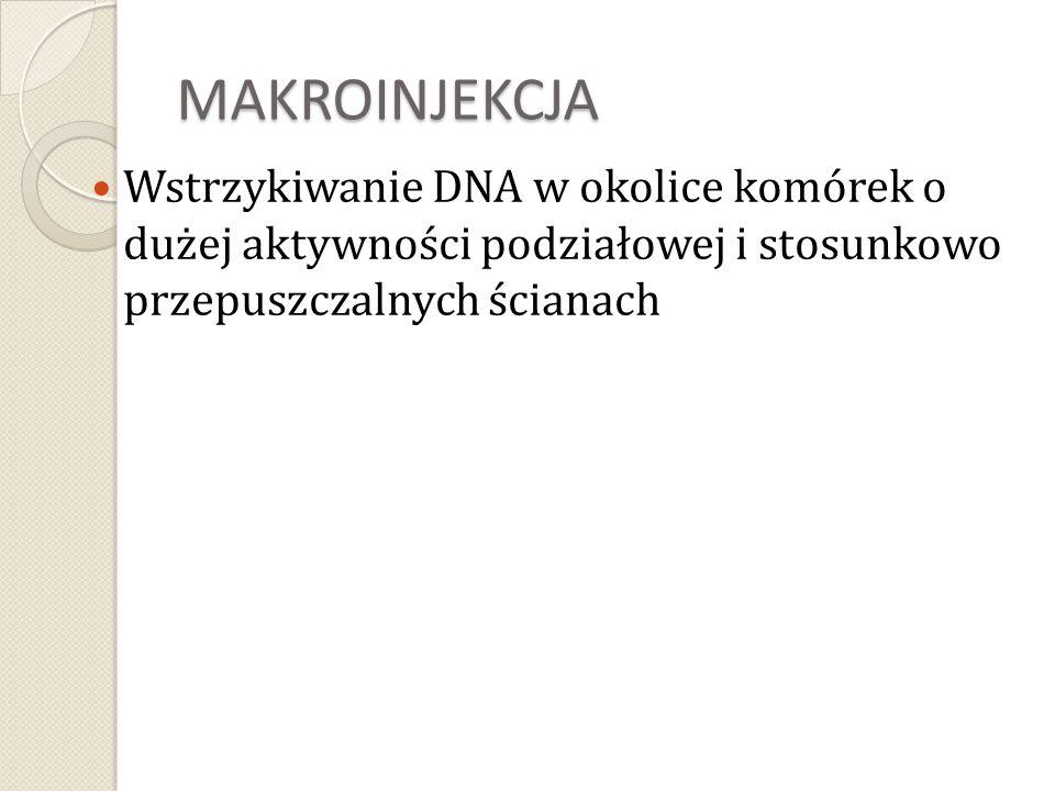 MAKROINJEKCJA Wstrzykiwanie DNA w okolice komórek o dużej aktywności podziałowej i stosunkowo przepuszczalnych ścianach