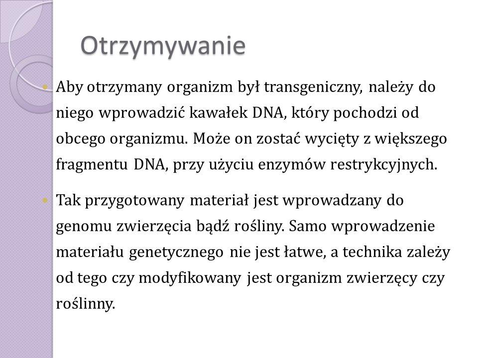 Otrzymywanie Aby otrzymany organizm był transgeniczny, należy do niego wprowadzić kawałek DNA, który pochodzi od obcego organizmu. Może on zostać wyci