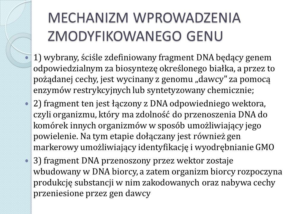 MECHANIZM WPROWADZENIA ZMODYFIKOWANEGO GENU 1) wybrany, ściśle zdefiniowany fragment DNA będący genem odpowiedzialnym za biosyntezę określonego białka
