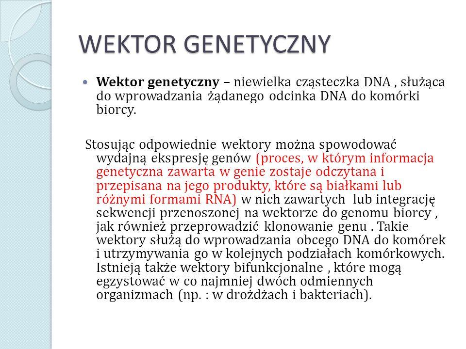 RODZAJE WEKTORÓW Ważniejsze rodzaje wektorów wykorzystywanych w genetyce to: wektory plazmidowe, wektory fagowe (wykorzystujące bakteriofagi), kosmidy, wektory ekspresyjne, wektory wahadłowe, wektory sekrecyjne, sztuczne chromosomy drożdżowe (YAC), sztuczne chromosomy bakteryjne (BAC) i sztuczny ludzki chromosom (HAC).