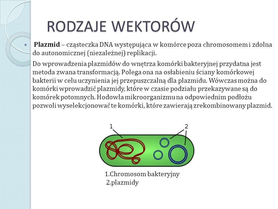 RODZAJE WEKTORÓW Plazmid – cząsteczka DNA występująca w komórce poza chromosomem i zdolna do autonomicznej (niezależnej) replikacji. Do wprowadzenia p