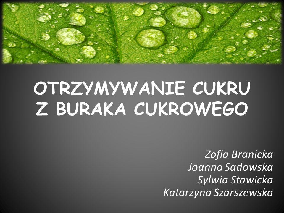 OTRZYMYWANIE CUKRU Z BURAKA CUKROWEGO Zofia Branicka Joanna Sadowska Sylwia Stawicka Katarzyna Szarszewska