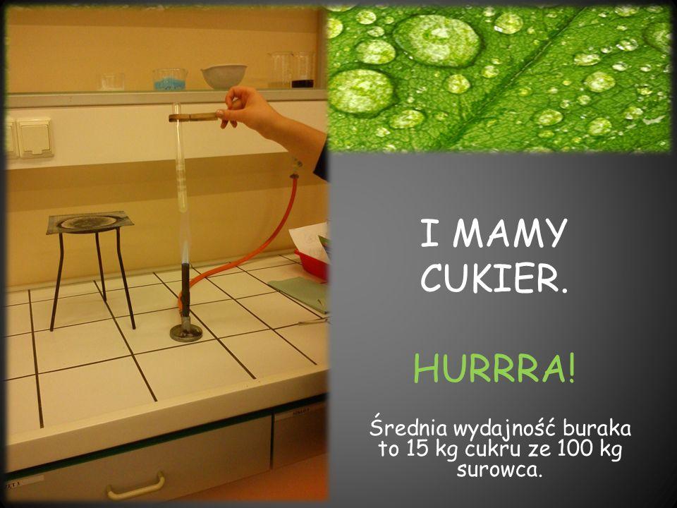 I MAMY CUKIER. HURRRA! Średnia wydajność buraka to 15 kg cukru ze 100 kg surowca.