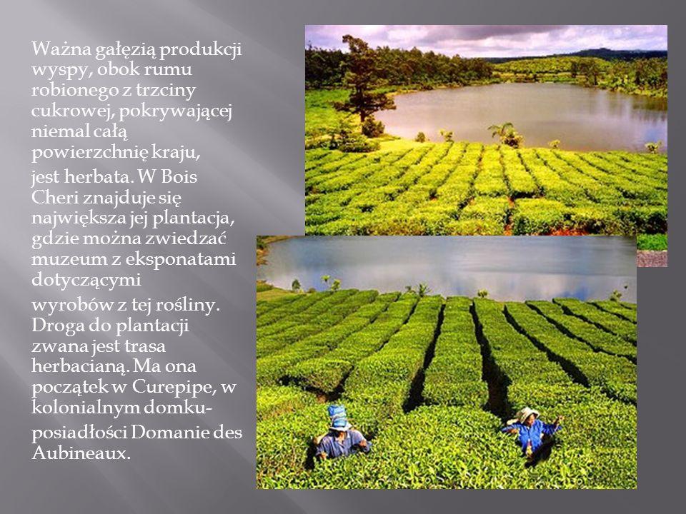 Ważna gałęzią produkcji wyspy, obok rumu robionego z trzciny cukrowej, pokrywającej niemal całą powierzchnię kraju, jest herbata. W Bois Cheri znajduj