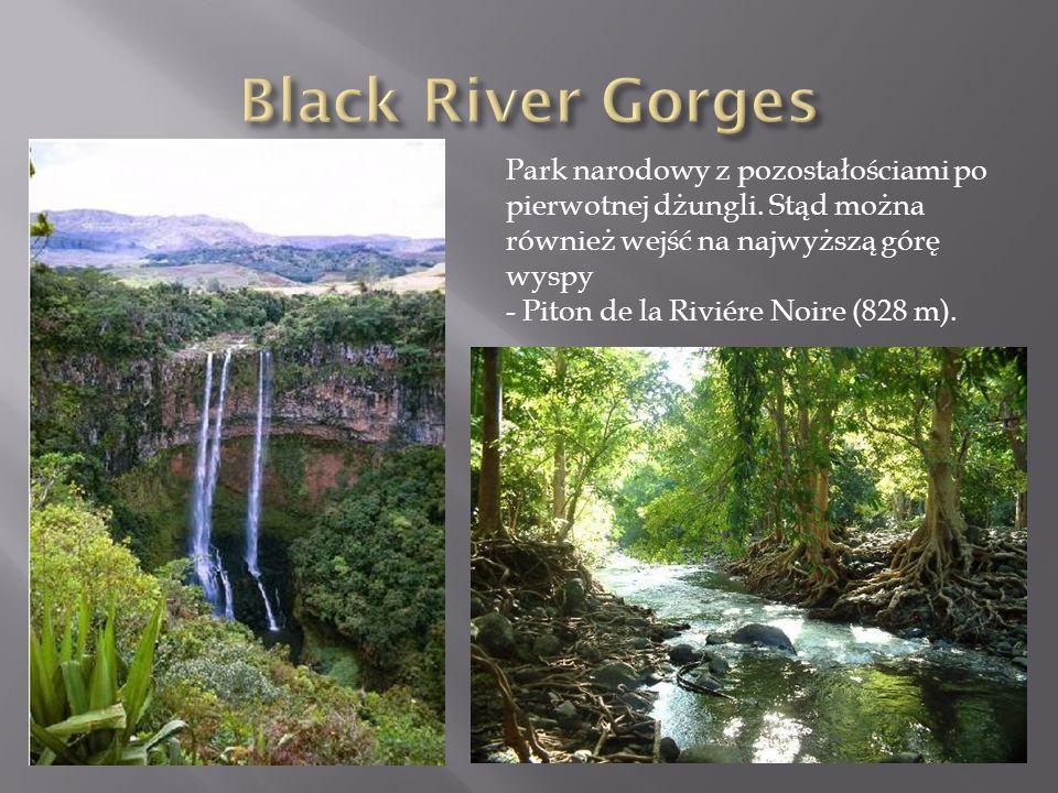 Park narodowy z pozostałościami po pierwotnej dżungli. Stąd można również wejść na najwyższą górę wyspy - Piton de la Riviére Noire (828 m).