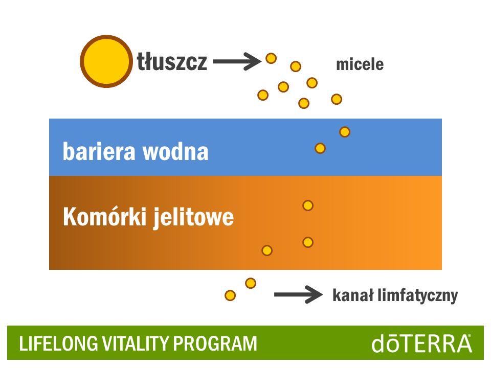 LIFELONG VITALITY PROGRAM tłuszcz micele bariera wodna Komórki jelitowe kanał limfatyczny