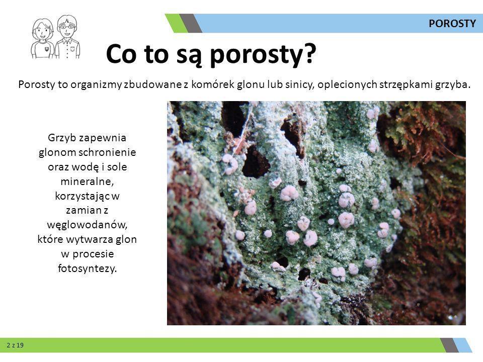 Porosty to organizmy zbudowane z komórek glonu lub sinicy, oplecionych strzępkami grzyba. Grzyb zapewnia glonom schronienie oraz wodę i sole mineralne