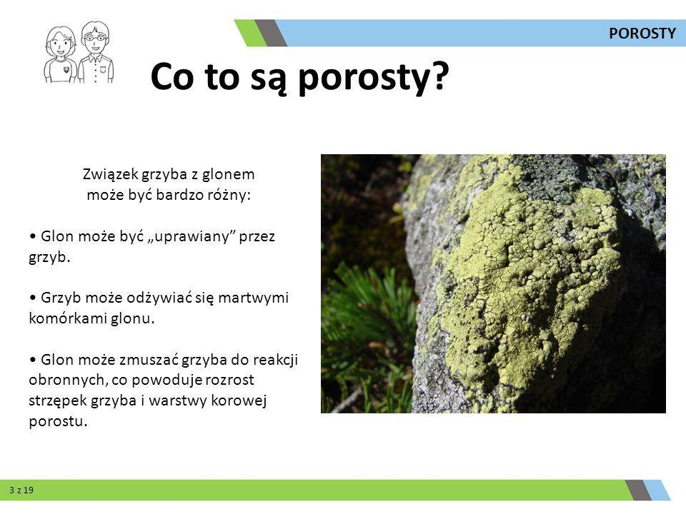 Związek grzyba z glonem może być bardzo różny: Glon może być uprawiany przez grzyb. Grzyb może odżywiać się martwymi komórkami glonu. Glon może zmusza