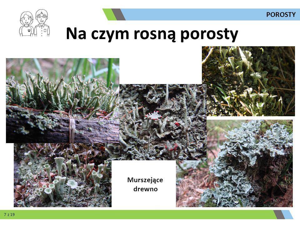 Murszejące drewno Na czym rosną porosty 7 z 19 POROSTY
