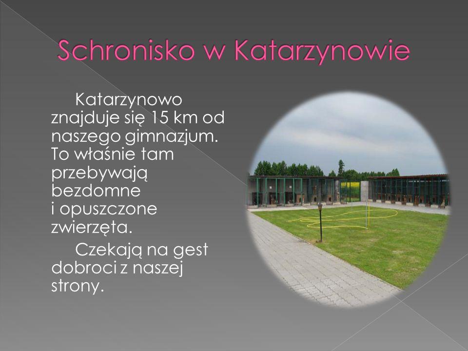 Katarzynowo znajduje się 15 km od naszego gimnazjum. To właśnie tam przebywają bezdomne i opuszczone zwierzęta. Czekają na gest dobroci z naszej stron