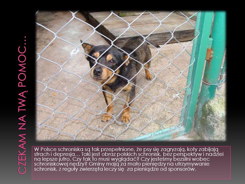 W Polsce schroniska są tak przepełnione, że psy się zagryzają, koty zabijają strach i depresja… Taki jest obraz polskich schronisk, bez perspektyw i n