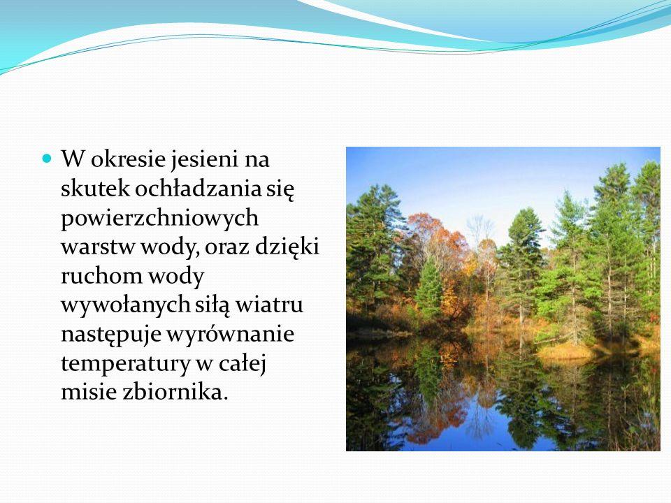 W okresie jesieni na skutek ochładzania się powierzchniowych warstw wody, oraz dzięki ruchom wody wywołanych siłą wiatru następuje wyrównanie temperat