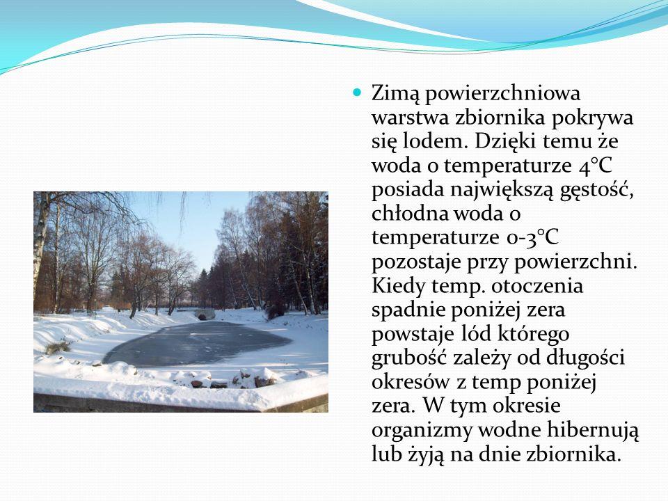 Zimą powierzchniowa warstwa zbiornika pokrywa się lodem. Dzięki temu że woda o temperaturze 4°C posiada największą gęstość, chłodna woda o temperaturz
