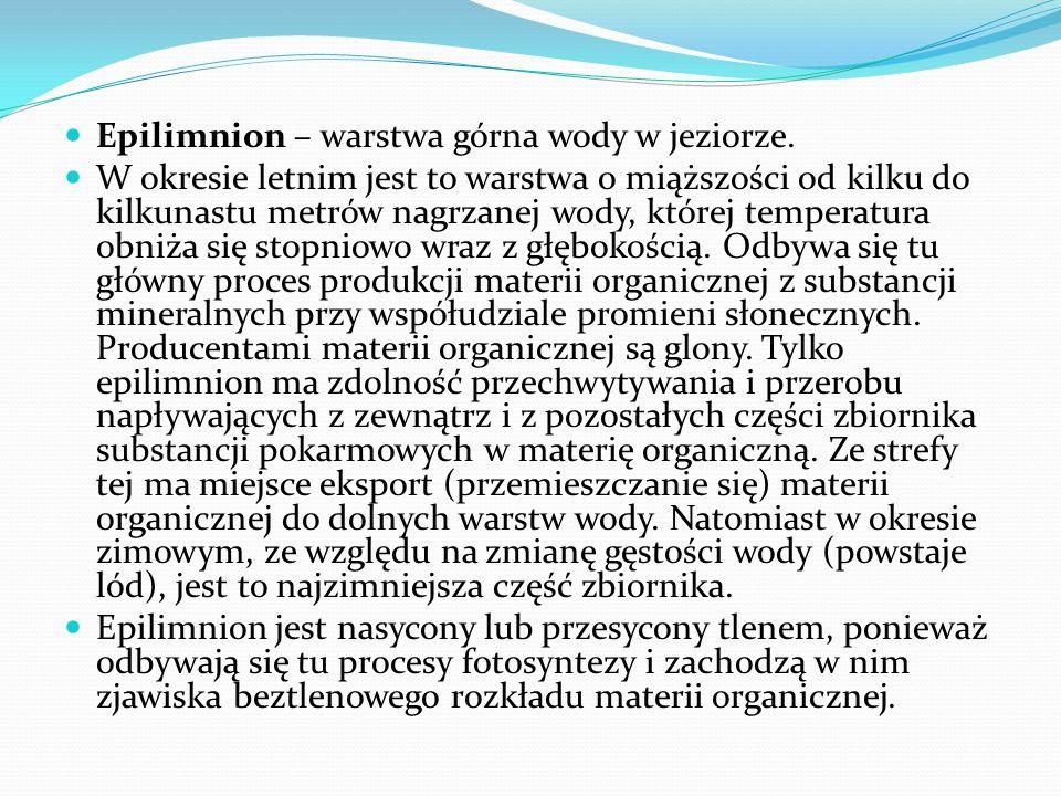 Epilimnion – warstwa górna wody w jeziorze. W okresie letnim jest to warstwa o miąższości od kilku do kilkunastu metrów nagrzanej wody, której tempera