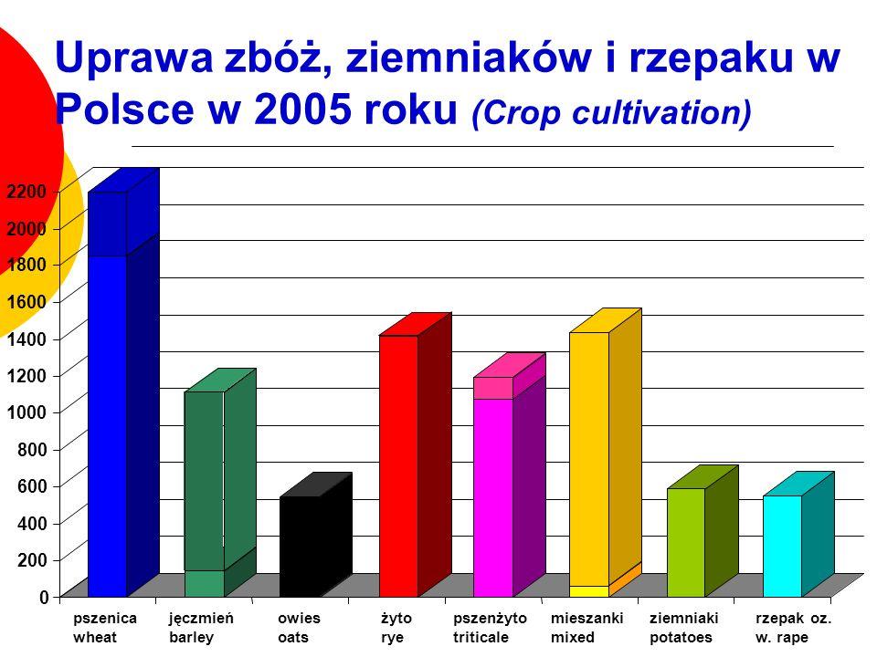 Uprawa zbóż, ziemniaków i rzepaku w Polsce w 2005 roku (Crop cultivation) 0 200 400 600 800 1000 1200 1400 1600 1800 2000 2200 pszenica wheat jęczmień