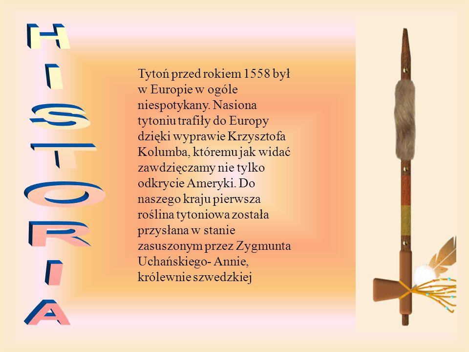 Tytoń przed rokiem 1558 był w Europie w ogóle niespotykany.