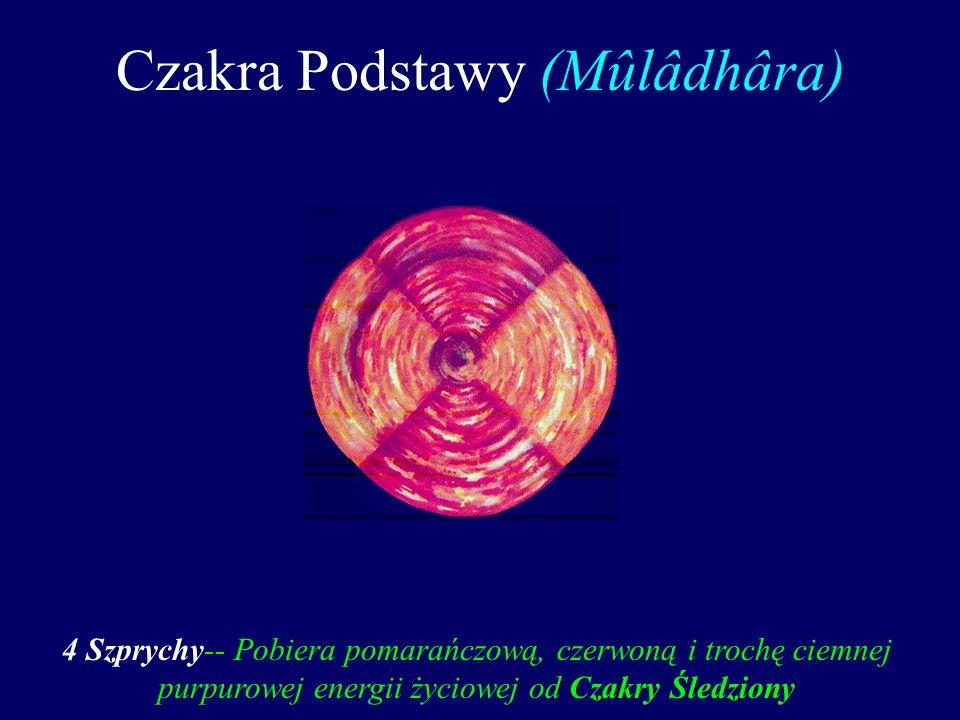 Czakra Podstawy (Mûlâdhâra) 4 Szprychy-- Pobiera pomarańczową, czerwoną i trochę ciemnej purpurowej energii życiowej od Czakry Śledziony