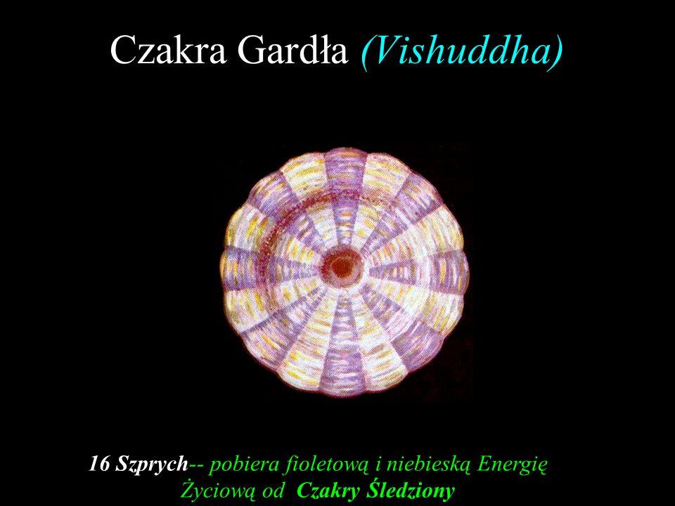 Czakra Gardła (Vishuddha) 16 Szprych-- pobiera fioletową i niebieską Energię Życiową od Czakry Śledziony