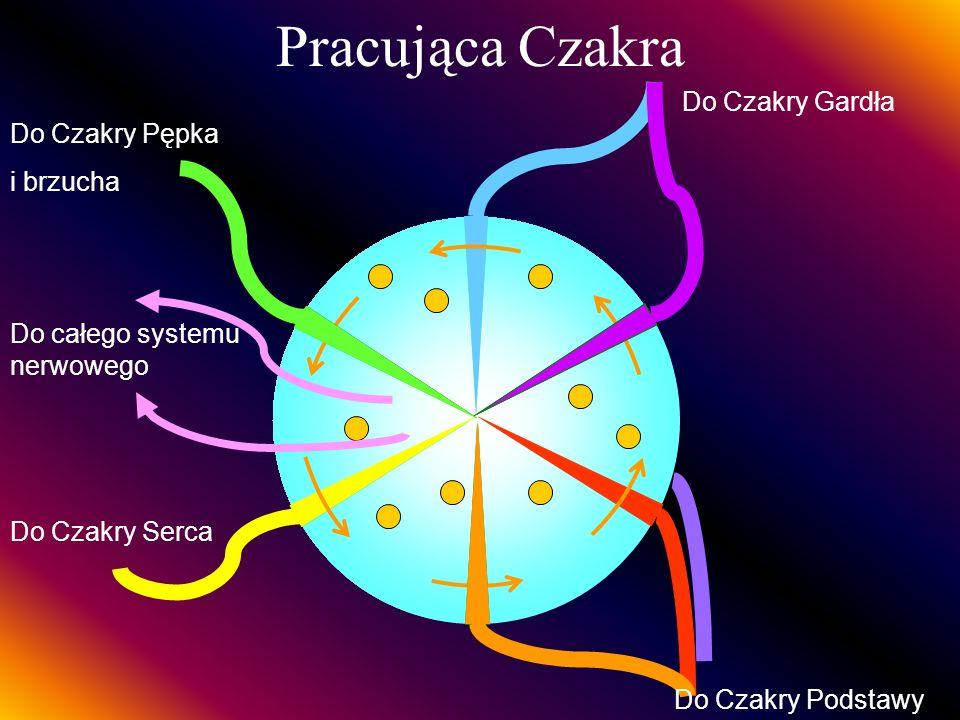 Pracująca Czakra Do Czakry Gardła Do Czakry Podstawy Do Czakry Serca Do Czakry Pępka i brzucha Do całego systemu nerwowego