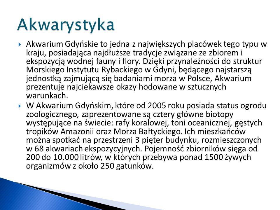 Akwarium Gdyńskie to jedna z największych placówek tego typu w kraju, posiadająca najdłuższe tradycje związane ze zbiorem i ekspozycją wodnej fauny i