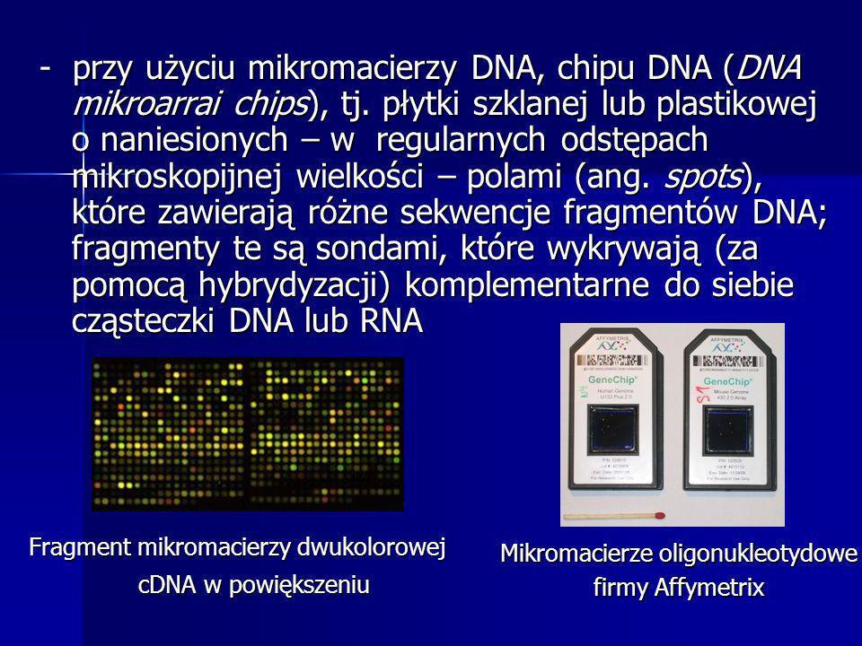 Fragment mikromacierzy dwukolorowej cDNA w powiększeniu Mikromacierze oligonukleotydowe firmy Affymetrix - przy użyciu mikromacierzy DNA, chipu DNA (D