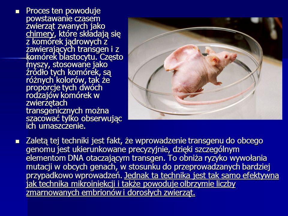 Proces ten powoduje powstawanie czasem zwierząt zwanych jako chimery, które składają się z komórek jądrowych z zawierających transgen i z komórek blas