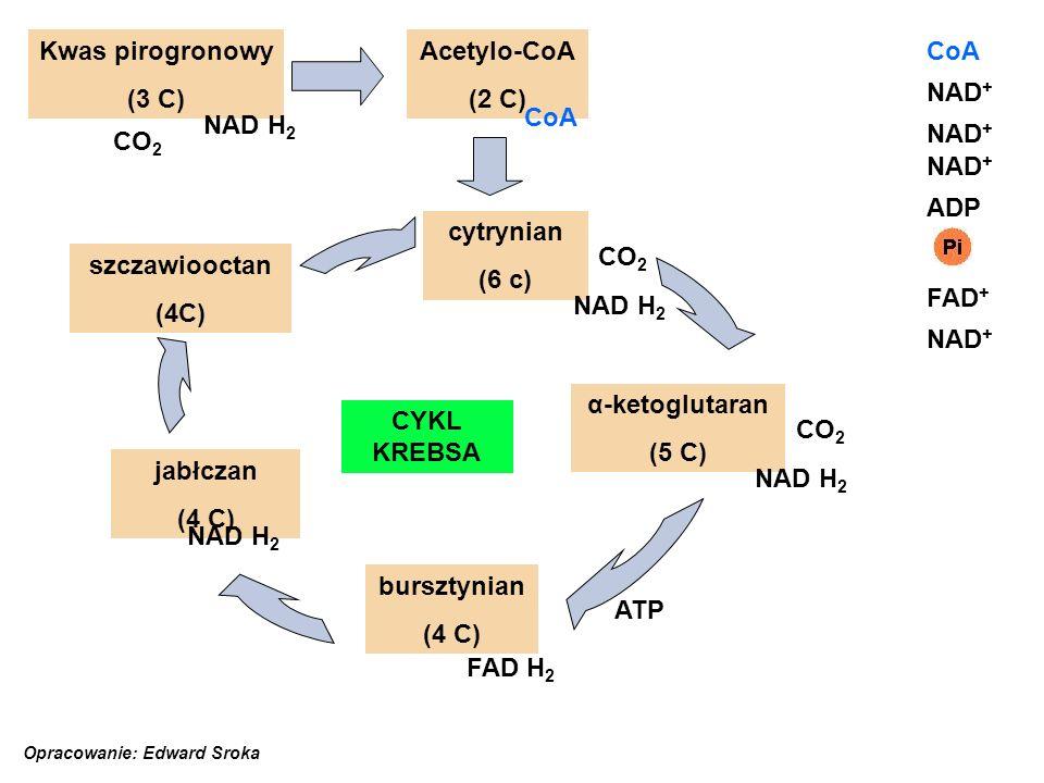 cytrynian (6 c) jabłczan (4 C) bursztynian (4 C) szczawiooctan (4C) α-ketoglutaran (5 C) Acetylo-CoA (2 C) Kwas pirogronowy (3 C) NAD + NAD H 2 NAD +