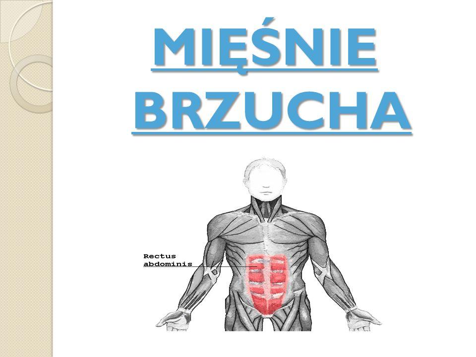 Mięśnie brzucha łączą klatkę piersiową z miednicą.