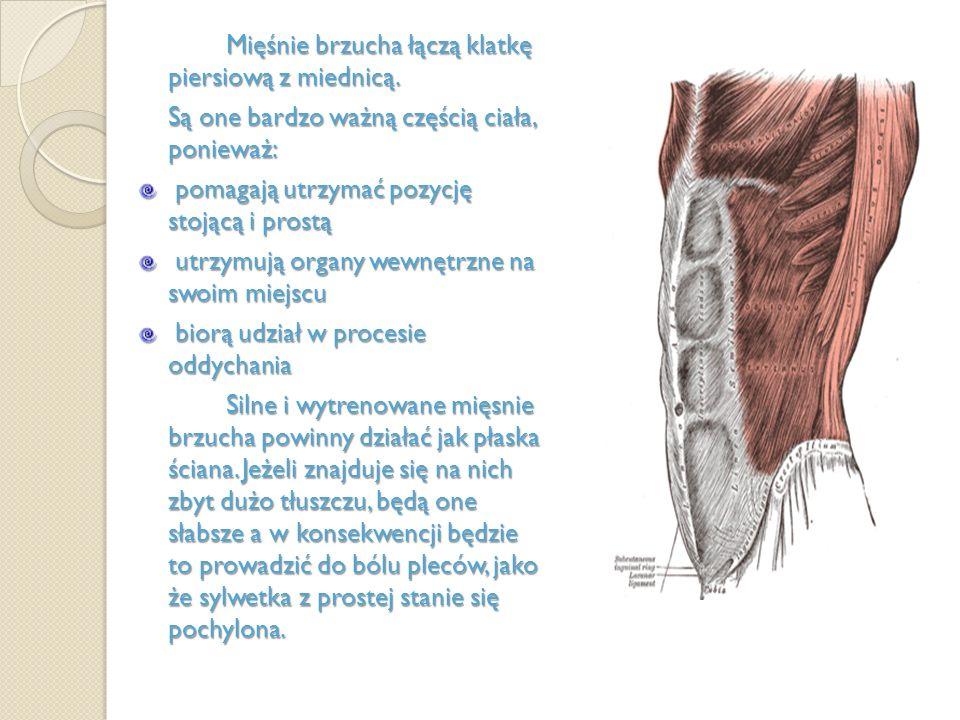 Mięśnie brzucha łączą klatkę piersiową z miednicą. Są one bardzo ważną częścią ciała, ponieważ: pomagają utrzymać pozycję stojącą i prostą pomagają ut