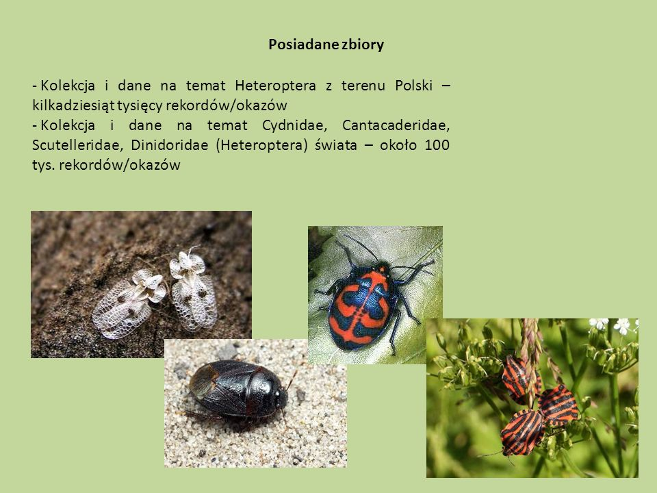 Posiadane zbiory - Kolekcja i dane na temat Heteroptera z terenu Polski – kilkadziesiąt tysięcy rekordów/okazów - Kolekcja i dane na temat Cydnidae, Cantacaderidae, Scutelleridae, Dinidoridae (Heteroptera) świata – około 100 tys.