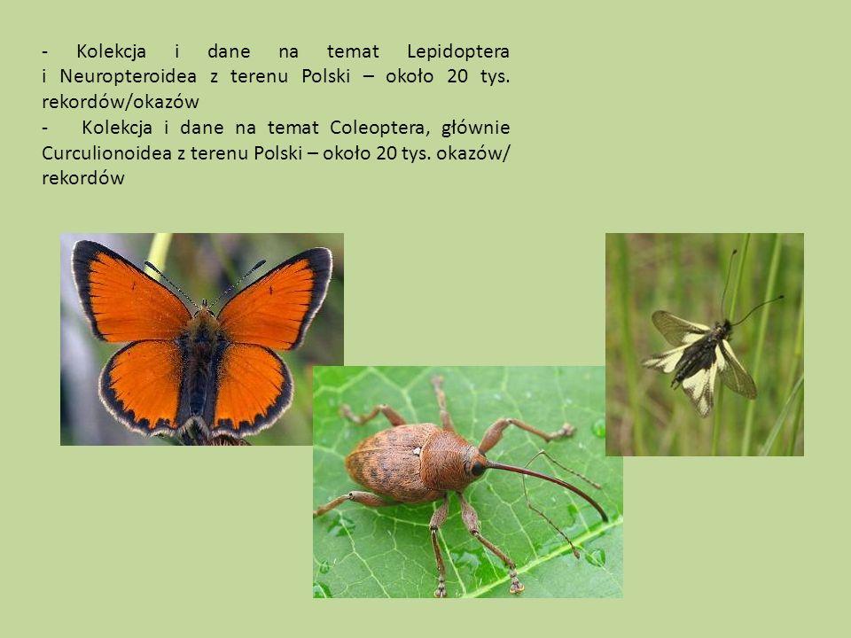 - Kolekcja i dane na temat Lepidoptera i Neuropteroidea z terenu Polski – około 20 tys.