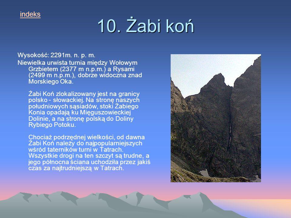 10.Żabi koń Wysokość: 2291m. n. p. m.