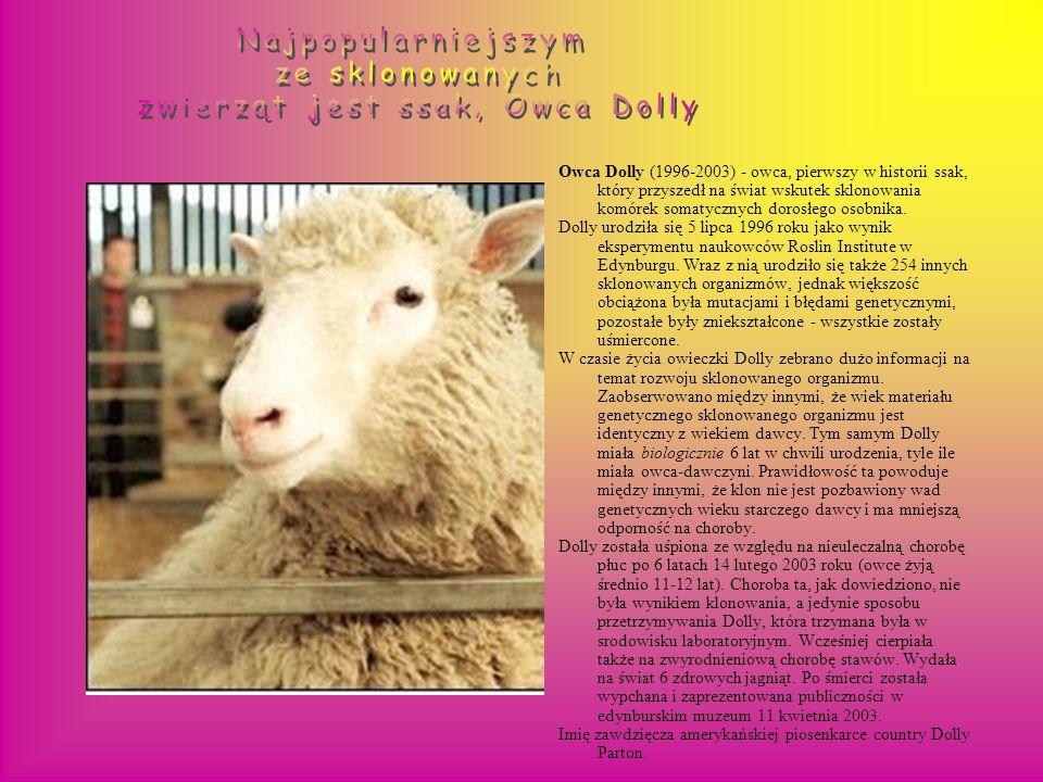 królik: (marzec-kwiecień, 2003) we Francji i Korei Południowej. muł: Idaho Gem (samiec, maj 2003) i Utah Pioneer (samiec, lipiec 2003) jeleń: Dewey (2