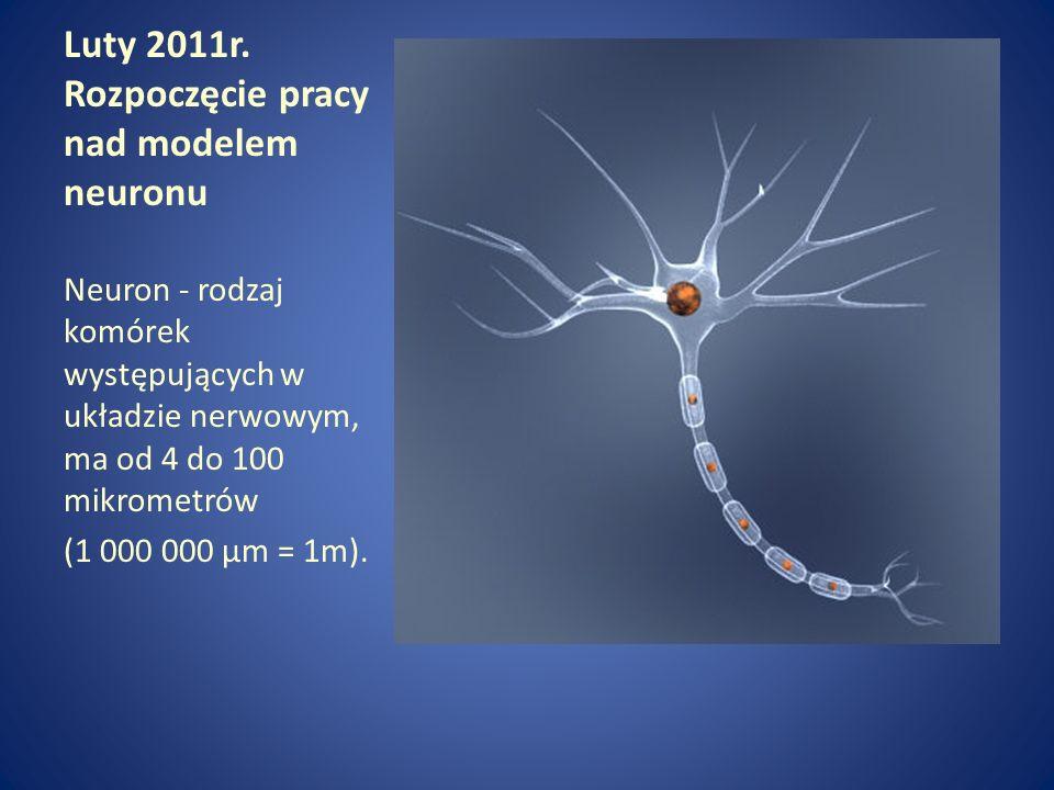 Luty 2011r. Rozpoczęcie pracy nad modelem neuronu Neuron - rodzaj komórek występujących w układzie nerwowym, ma od 4 do 100 mikrometrów (1 000 000 μm