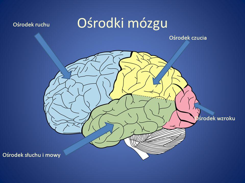 Ośrodki mózgu Ośrodek ruchu Ośrodek czucia Ośrodek wzroku Ośrodek słuchu i mowy
