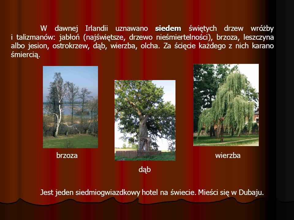 siedem W dawnej Irlandii uznawano siedem świętych drzew wróżby i talizmanów: jabłoń (najświętsze, drzewo nieśmiertelności), brzoza, leszczyna albo jes