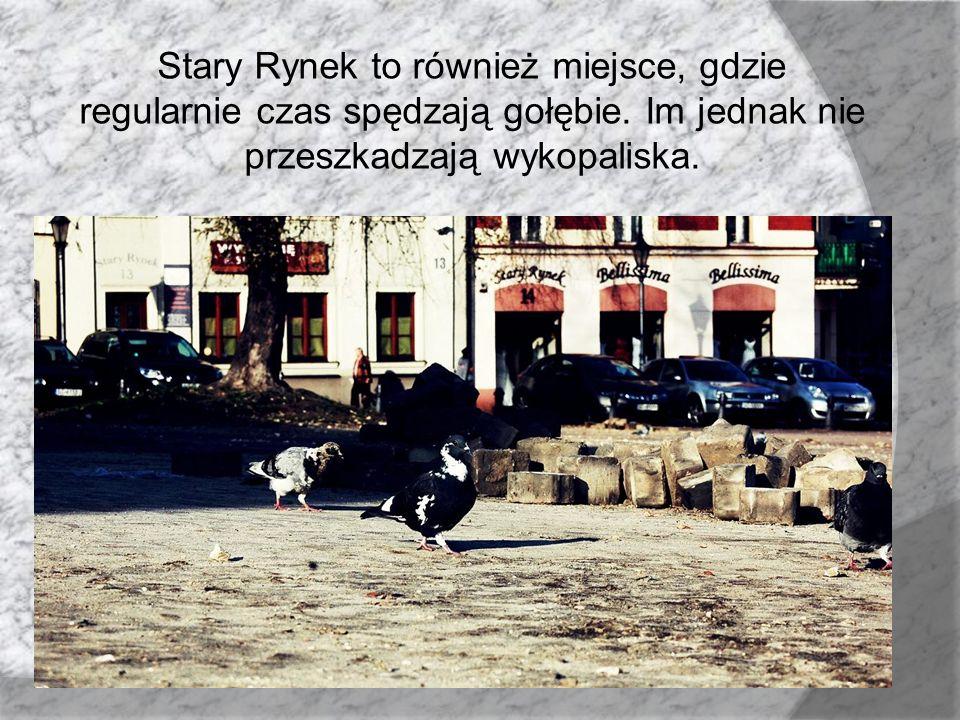 Stary Rynek to również miejsce, gdzie regularnie czas spędzają gołębie. Im jednak nie przeszkadzają wykopaliska.