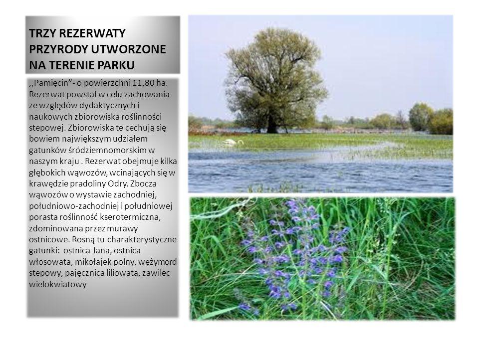 TRZY REZERWATY PRZYRODY UTWORZONE NA TERENIE PARKU,,Pamięcin- o powierzchni 11,80 ha. Rezerwat powstał w celu zachowania ze względów dydaktycznych i n