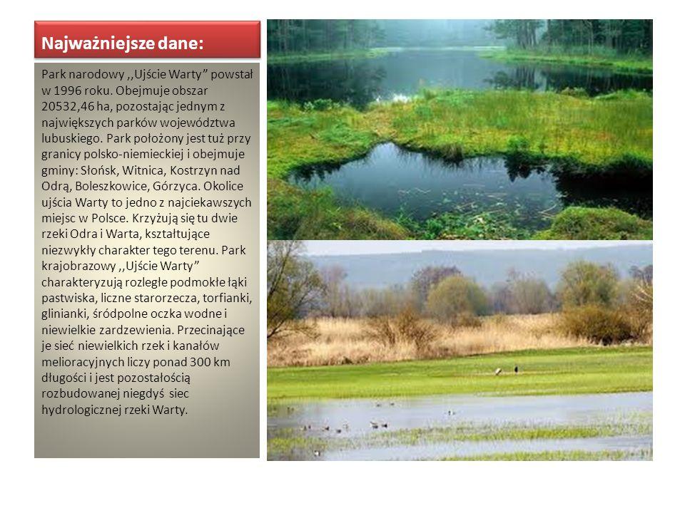 Najważniejsze dane: Park narodowy,,Ujście Warty powstał w 1996 roku. Obejmuje obszar 20532,46 ha, pozostając jednym z największych parków województwa