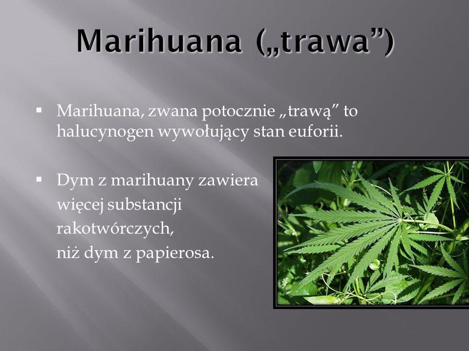 Marihuana, zwana potocznie trawą to halucynogen wywołujący stan euforii. Dym z marihuany zawiera więcej substancji rakotwórczych, niż dym z papierosa.