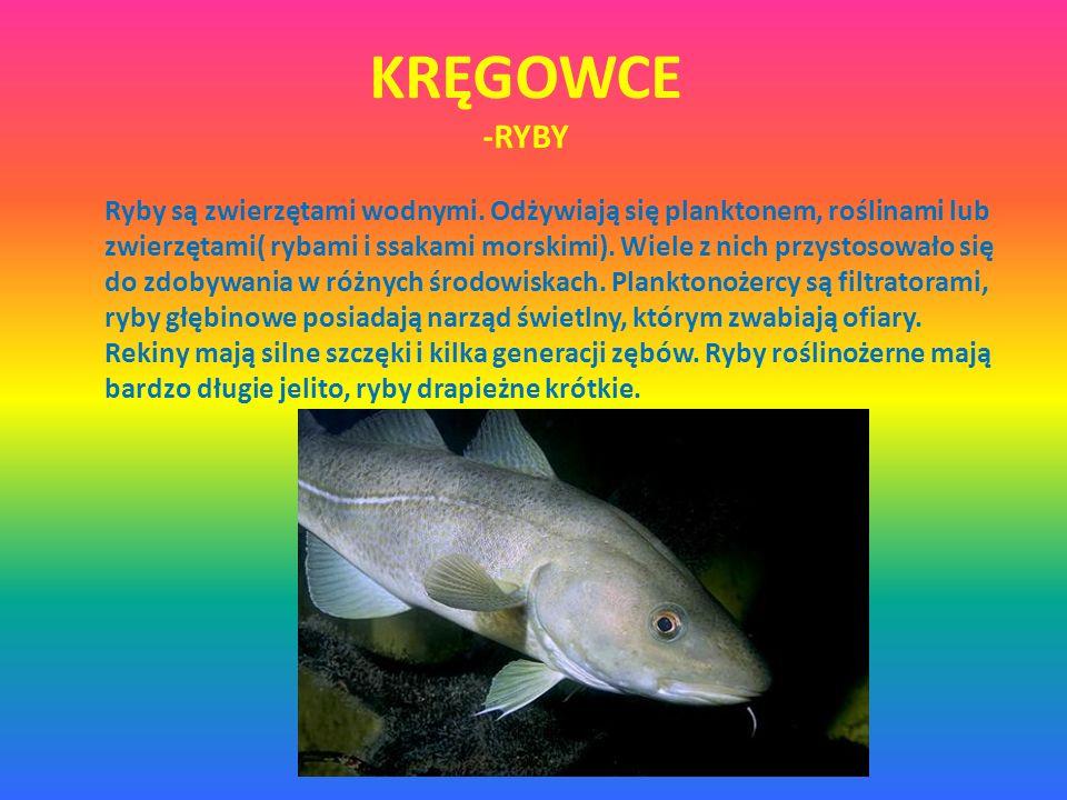 KRĘGOWCE -RYBY Ryby są zwierzętami wodnymi. Odżywiają się planktonem, roślinami lub zwierzętami( rybami i ssakami morskimi). Wiele z nich przystosował