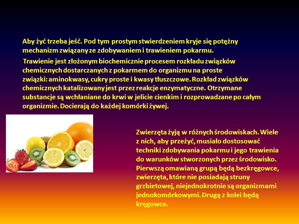 Aby żyć trzeba jeść. Pod tym prostym stwierdzeniem kryje się potężny mechanizm związany ze zdobywaniem i trawieniem pokarmu. Trawienie jest złożonym b