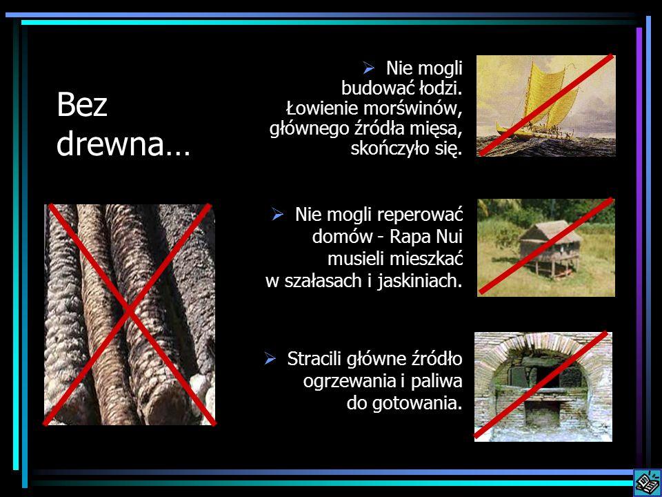 Bez drewna… Nie mogli budować łodzi. Łowienie morświnów, głównego źródła mięsa, skończyło się. Nie mogli reperować domów - Rapa Nui musieli mieszkać w