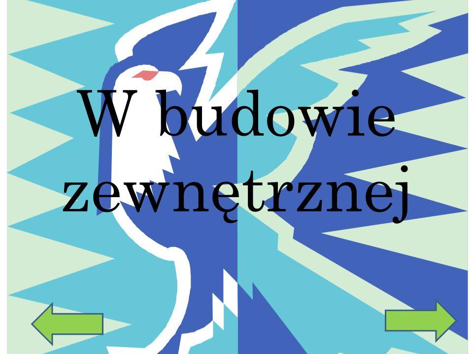 Przystosowanie ptaków do lotu w budowie zewnętrznej i wewnętrznej Wiktoria Pietruszka