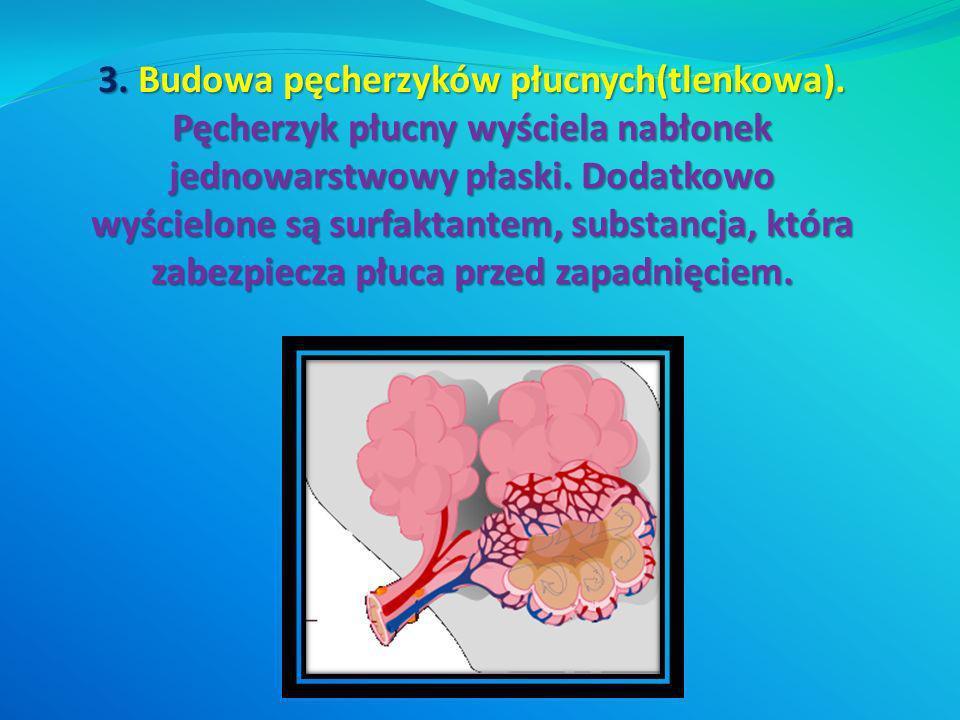 3. Budowa pęcherzyków płucnych(tlenkowa). Pęcherzyk płucny wyściela nabłonek jednowarstwowy płaski. Dodatkowo wyścielone są surfaktantem, substancja,