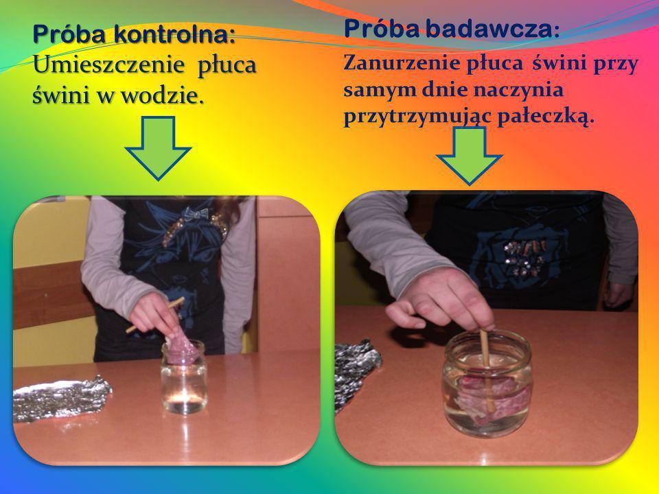 Próba kontrolna: Umieszczenie płuca świni w wodzie. Próba badawcza : Zanurzenie płuca świni przy samym dnie naczynia przytrzymując pałeczką.